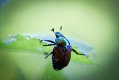 insektenschutzrollo für jeden anspruch