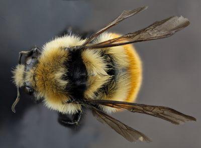 insektenschutzrollos für türen